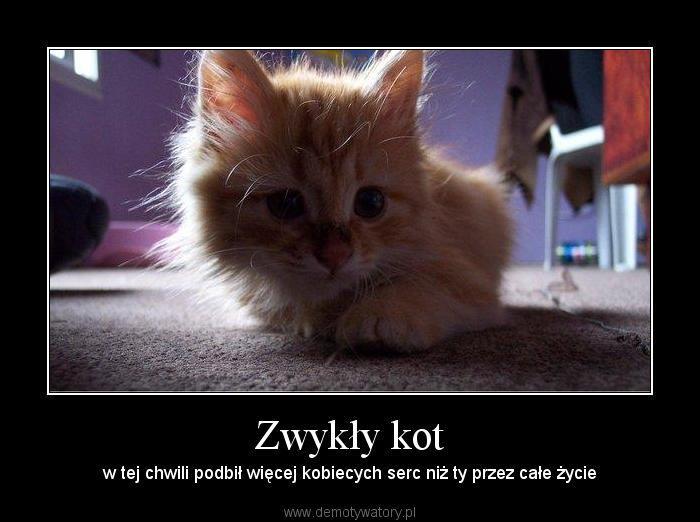 Zwykły kot - w tej chwili podbił więcej kobiecych serc niż ty przez całe życie