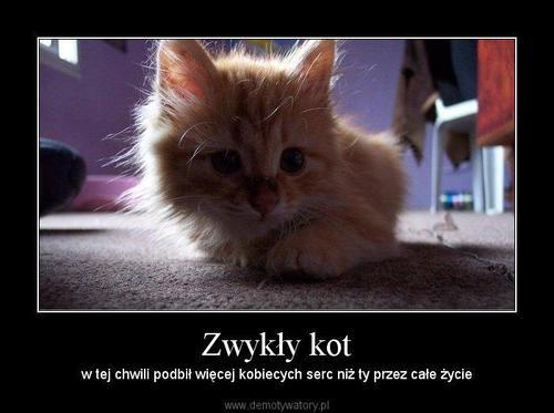 http://demotywatory.pl/uploads/1247040360_by_shiro__500.jpg