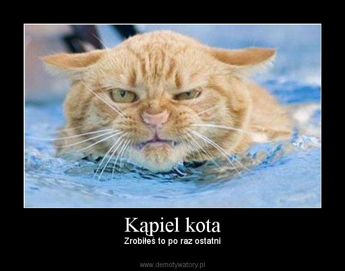 Kąpiel kota - Zrobiłeś to po raz ostatni