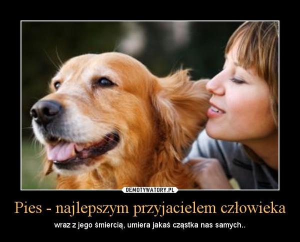 Obraz znaleziony dla: pies jako przyjaciel człowieka