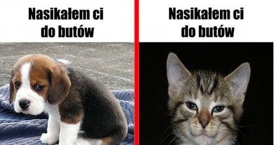Psy Vs Koty Demotywatorypl