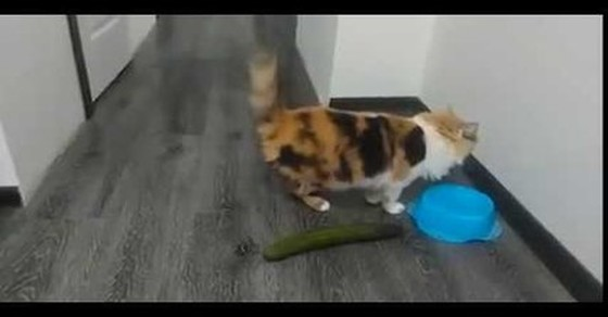 Koty Vs Ogórki Demotywatorypl