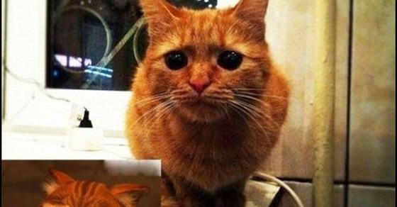 Kot Ze Shreka Istnieje Demotywatorypl