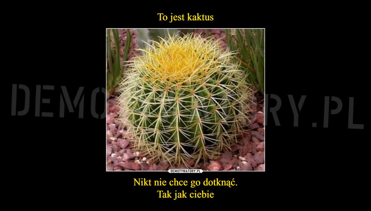 To Jest Kaktus Nikt Nie Chce Go Dotknąć Tak Jak Ciebie