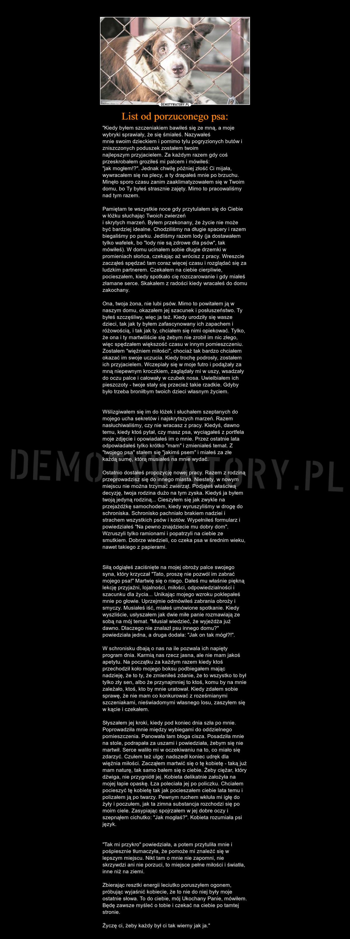 List Od Porzuconego Psa Demotywatorypl