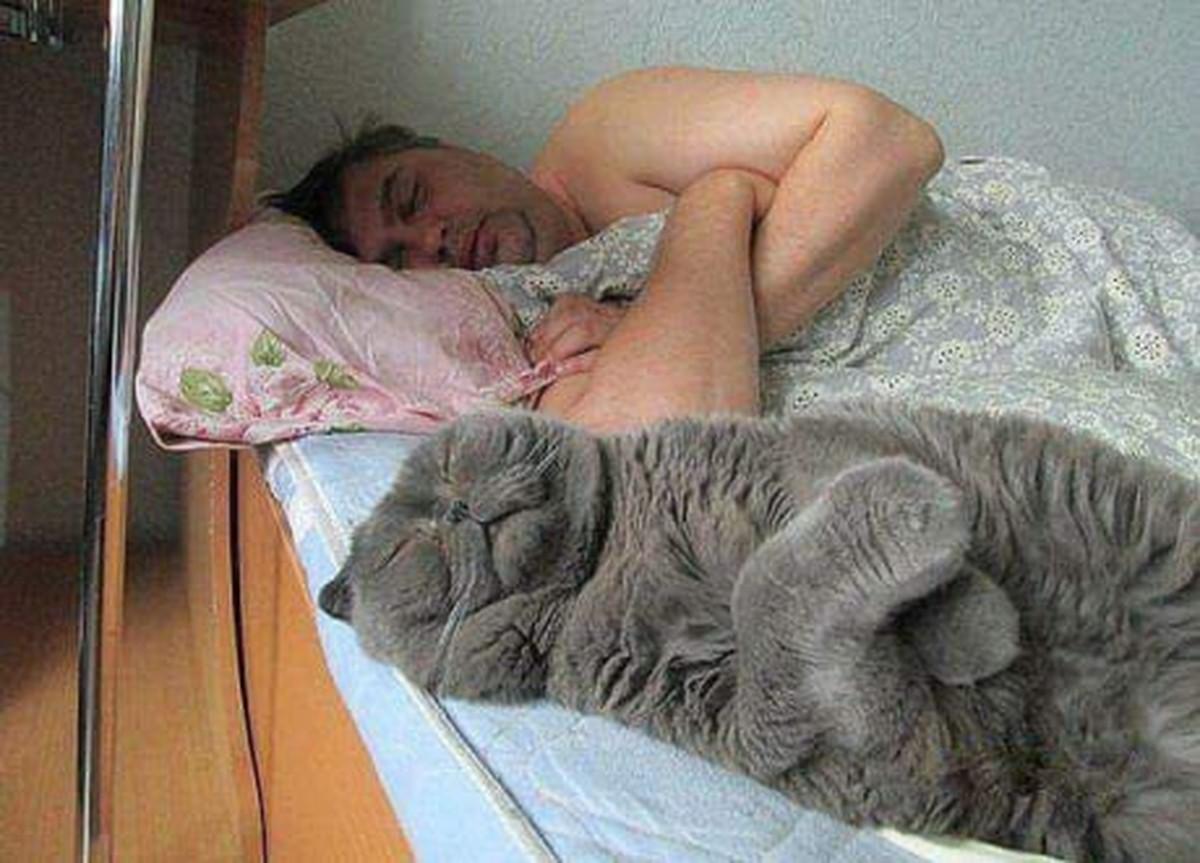 Для, смешные картинки когда спят