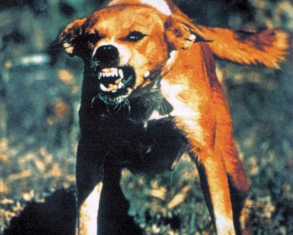 dog with rabies - 725×580