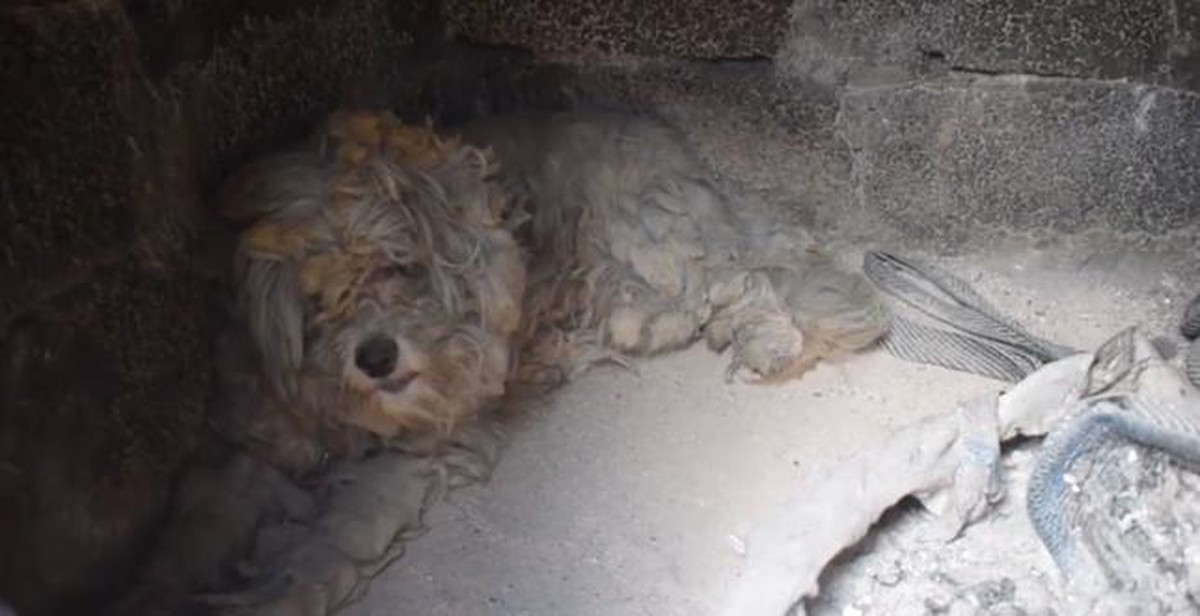 Znalezione obrazy dla zapytania pies przeżył pożar w grecji