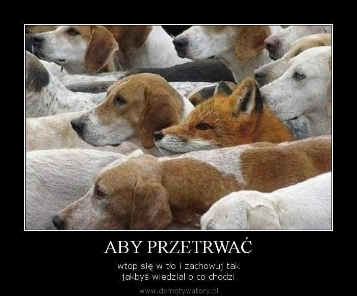 http://demotywatory.pl/uploads/2524.jpg