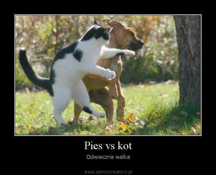 Pies vs kot - Odwieczna walka